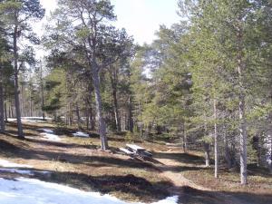 Femund Nasjonalparkhotell om vinteren