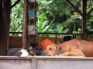 Pet or pets staying with guests at The Pelican House Hostel