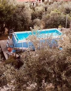 The swimming pool at or near Serranello Azienda Agricola