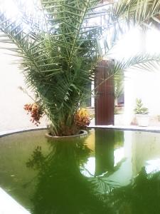 The swimming pool at or near 33 Palms Resort
