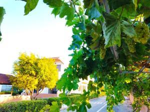 Puutarhaa majoituspaikan Kyriakos Studios ulkopuolella