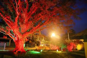 Um jardim em Morada da Figueira