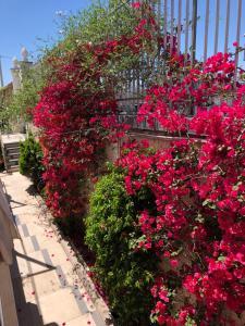 A garden outside Golden Mile B&B