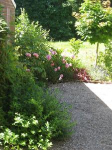 Ein Garten an der Unterkunft Campen Cottage
