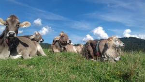 Haustiere von Gästen der Unterkunft Gästehaus Bergstüberl