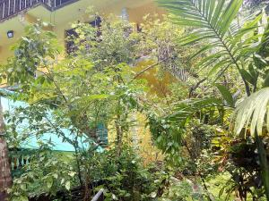 A garden outside Aguiar Guest House
