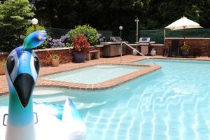 The swimming pool at or near Mt Tamborine Motel