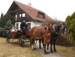 Attività di equitazione presso la casa vacanze o nelle vicinanze