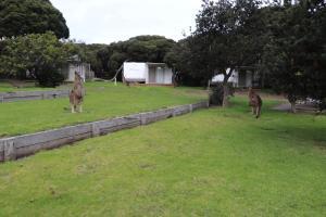 A garden outside Anglesea Family Caravan Park