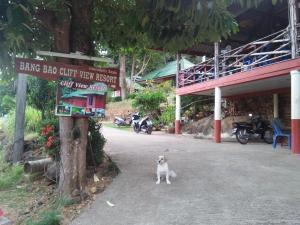 Haustiere von Gästen der Unterkunft Cliff View Resort