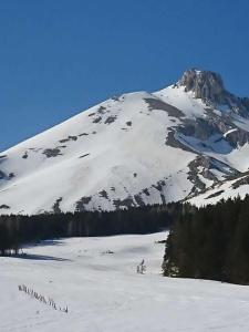 Ammoglja during the winter