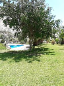 A garden outside Rio Lindo Ecolodge