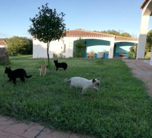 Animals at the hotel or nearby