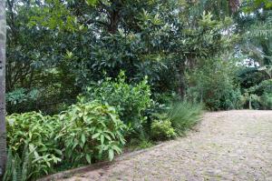 A garden outside Villa Bottaro