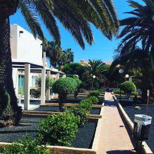 A garden outside Alisios Playa
