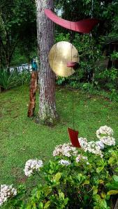 Um jardim em Casa do Beto