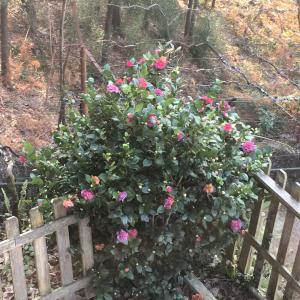 Um jardim no exterior de Quinta das Leiras