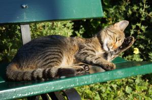 Domáce zviera alebo zvieratá hostí v ubytovaní Bed and Breakfast Wildrose