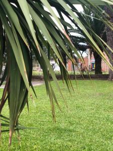 A garden outside Bidieen Inn Uruguay