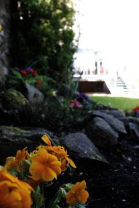A garden outside Culane House Hotel - B&B