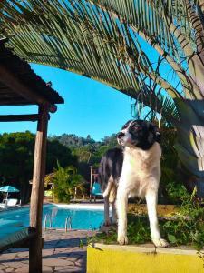 The swimming pool at or near Fazenda Paisagem Chalés