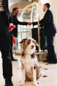 Pet or pets staying with guests at Grand Mercure Sao Paulo Ibirapuera