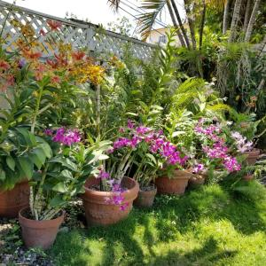 A garden outside Orchid Cottage