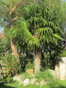 A garden outside Albergo Little Garden