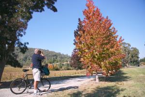 Biking at or in the surroundings of Ovens Valley Motor Inn