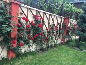 O grădină în afara Pension Jojo