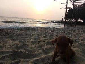 Pet or pets staying with guests at Hostel Blue Sea Rincon del Mar