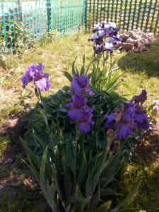 Сад в Dom 144