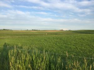 Przyroda w pobliżu tego gospodarstwa agroturystycznego