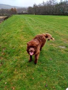 Pet or pets staying with guests at Cromlech PET FRIENDLY
