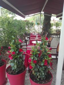 Restaurant ou autre lieu de restauration dans l'établissement Auberge de la Terrasse