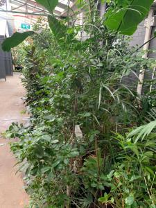 A garden outside Crown Bendigo CBD Motel