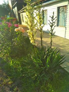 Сад в  Гостевой Дом Виктория на Морской