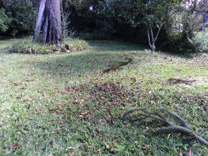 A garden outside Pousada O Canto do Sabia