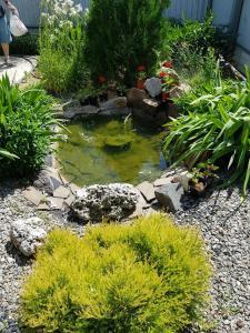 Сад в Гостевой Дом Лиза