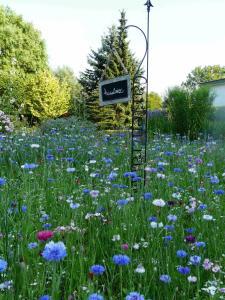 Ein Garten an der Unterkunft Pension Zur Kirchsee