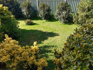 A garden outside Young Goldrush Motel