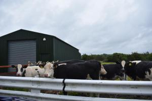 Pet or pets staying with guests at Taldrwst Farmhouse