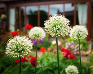 A garden outside Burnbank