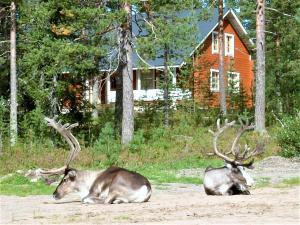 Eläimiä huvilan alueella tai sen lähistöllä