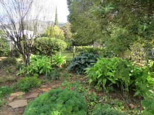 A garden outside 4 Rothman Street B&B