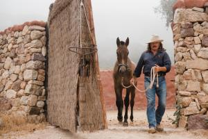 Horseback riding at the country house or nearby