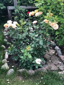 Сад в Гостевой дом на Шаховского