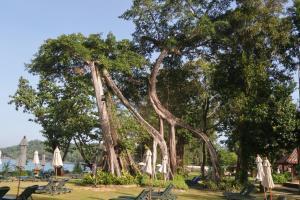 Aed väljaspool majutusasutust Khaolak Merlin Resort