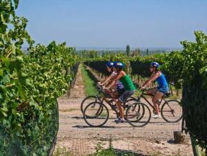 Biking at or in the surroundings of Grace Cafayate