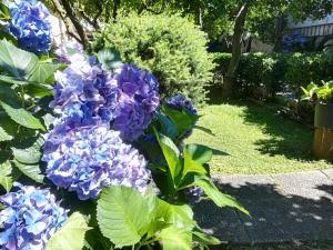 A garden outside Il Giardino degli Agrumi